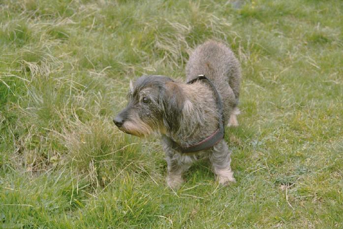 Eika (1988 - 2007)