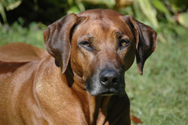 Amatonga (2002 - 2012)