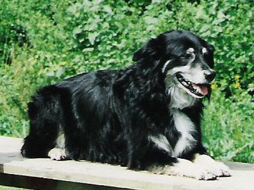 Max (1990 - 2006)