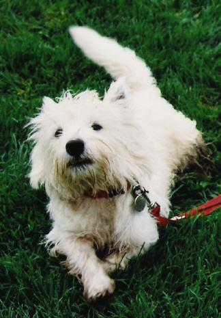 Irco (1997 - 2003)