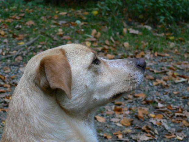 Gigi (2006 - 2010)