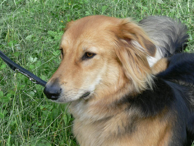 Mela (2005 - 2010)