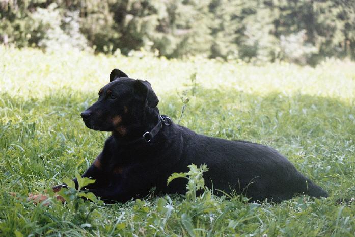 Tarim (1997 - 2006)