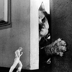 """Szenenfoto aus dem Film """"Die unglaubliche Geschichte des Mr. C"""" (The Incredible Shrinking Man, USA 1957) mit Grant Williams und der riesigen Katze"""