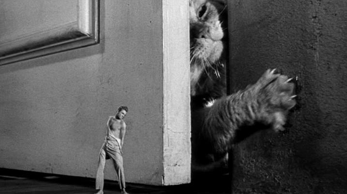Grant Williams kämpft gegen die Katze in Die unglaubliche Geschichte des Mr. C (The Incredible Shrinking Man, USA 1957)