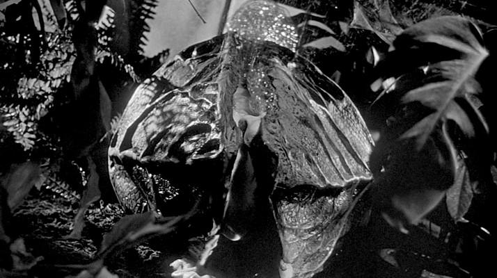 """Szenenfoto aus dem Film """"Die Dämonischen"""" (Invasion of the Body Snatchers, USA 1956) von Don Siegel; ein Pod"""