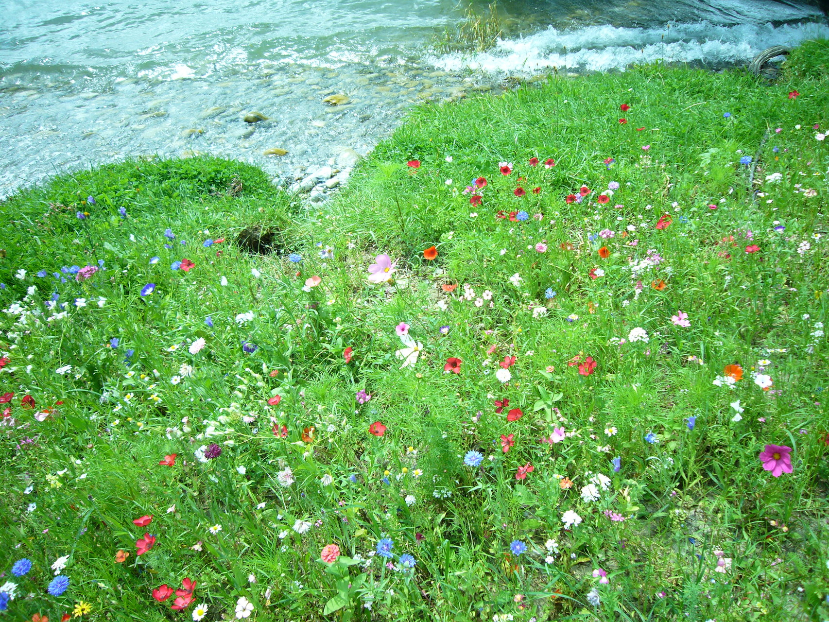 Blumenpracht am See