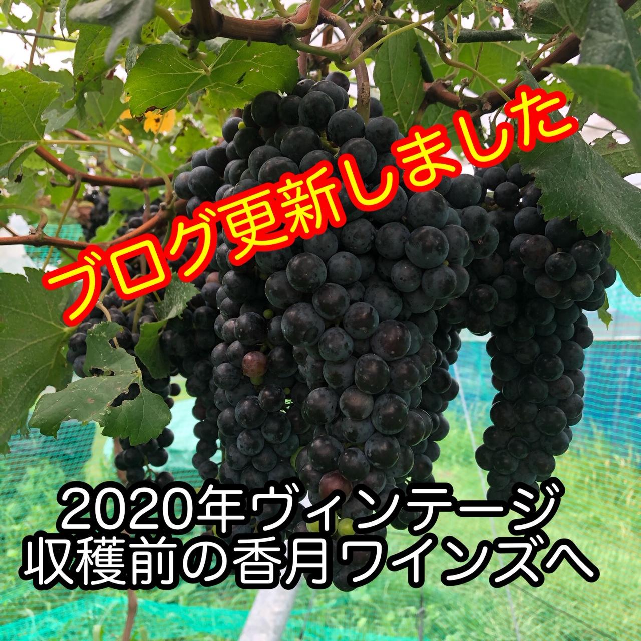 2020年8月 2020年ヴィンテージ収穫直前の香月ワインズへ