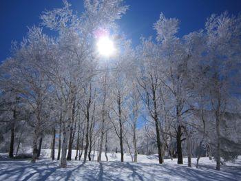 樹氷の白樺林