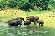 Elefanten Periyar