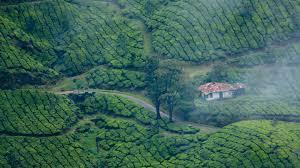 Munnar Tee Garten