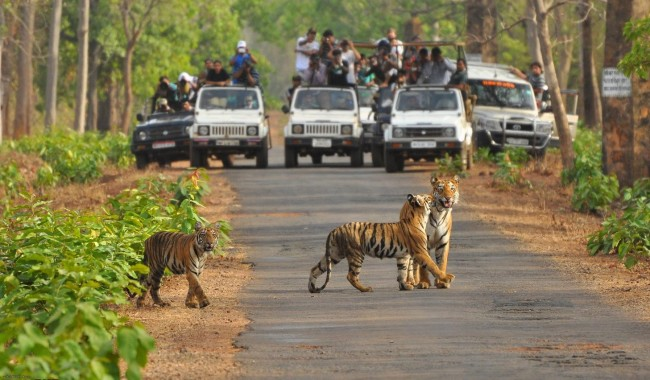 Ranthambhore National Park Tiger Wildlife