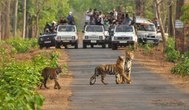 Ranthambhore National Park Tiger Wildlife
