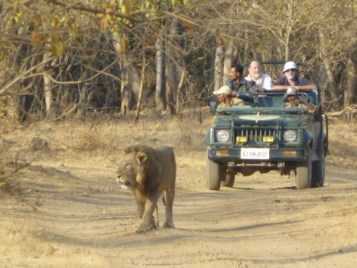 Sasann Gir National Park