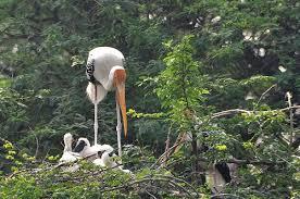 Vogelschutzgebiet Bharatpur