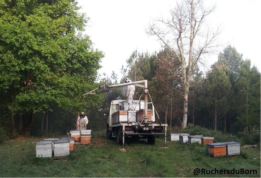 chargement des dernières ruches sur la dune qui ont fait la miellée d'arbousier pour les amener à celle d'acacia