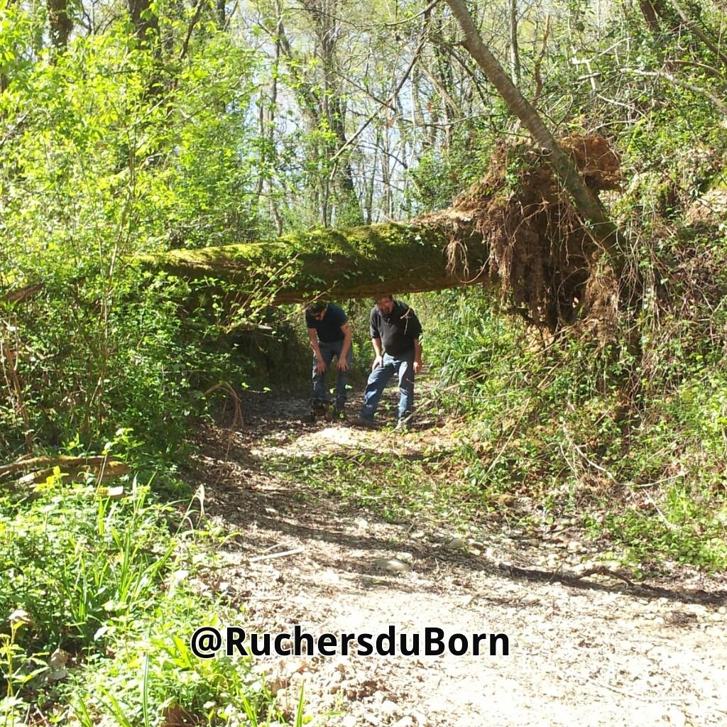 travailler dans et avec la nature : un arbre en travers du chemin qui mène au rucher...