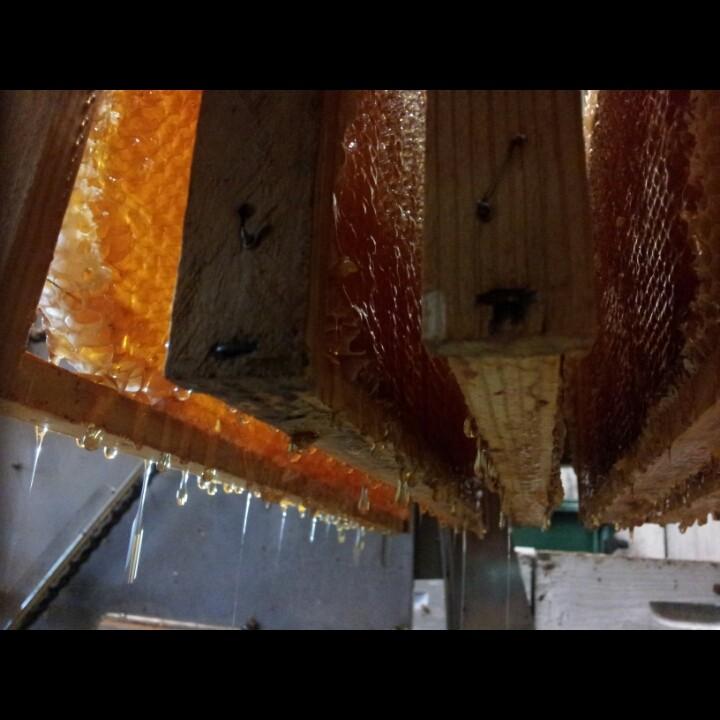 cadre de miel à la miellerie