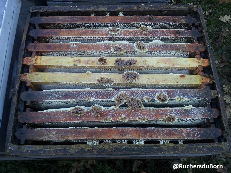 hausse de miel d'arbousier des Landes (décembre)