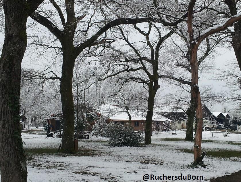 l'airial des Ruchers du Born sous la neige (février)