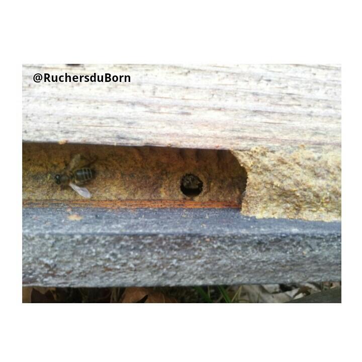 une entrée de ruche propolisée