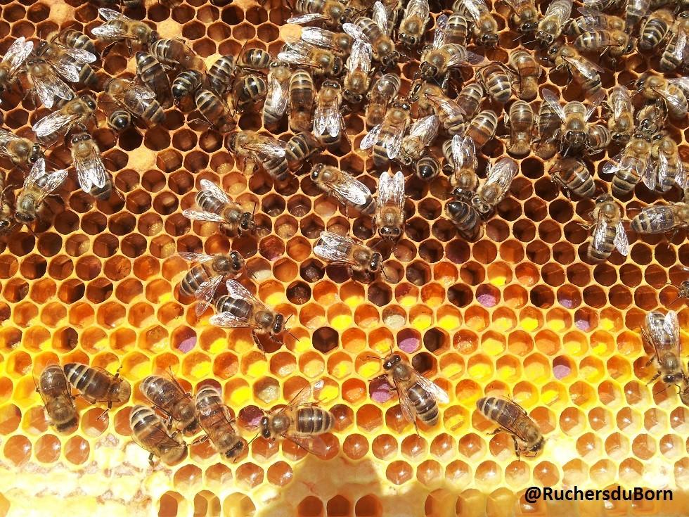 cadre de pollen : biodiversité de la forêt landaise (juin)