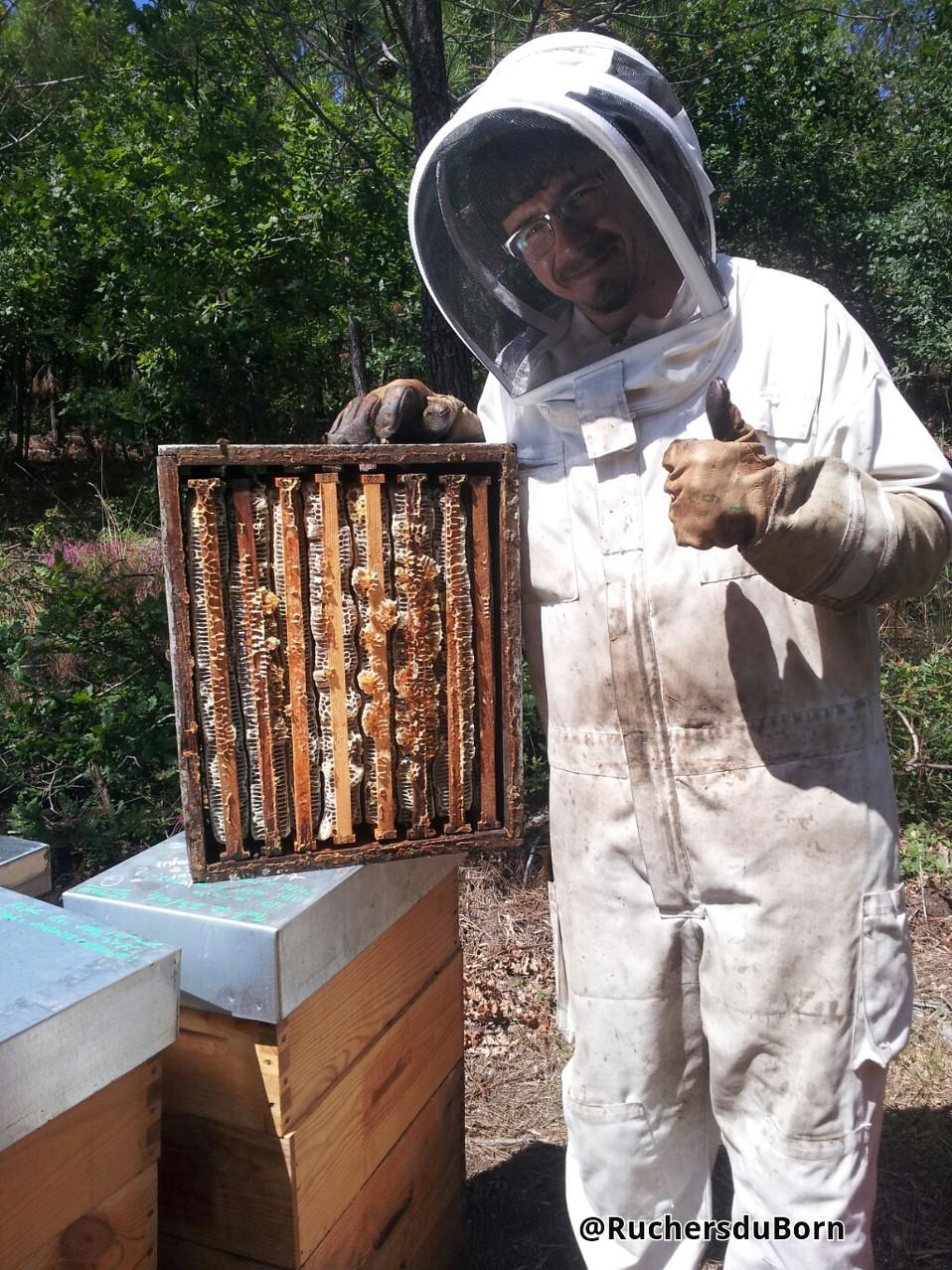 """une hausse au carré de miel de bruyère des Landes ; """"Good job girls"""""""