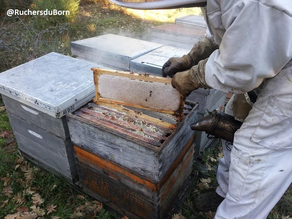 cadre et hausse de miel d'arbousier des Landes (décembre)