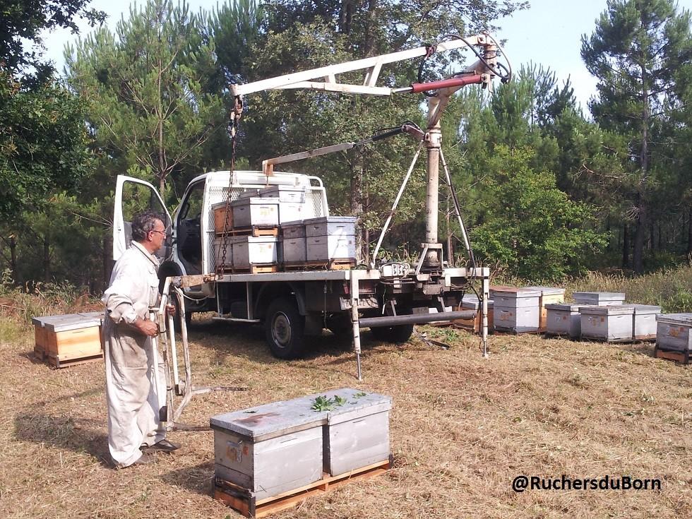 pose de ruches (juillet)