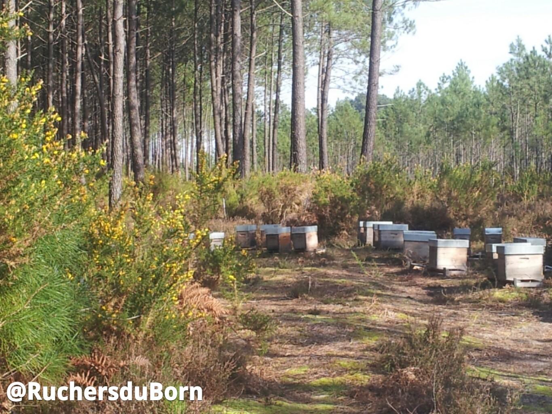 Retour aux ruches ! Plaisir d'apiculteur !