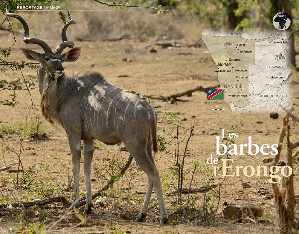 """Leitbild des Artikels """"Les barbes de l' Erongo"""" in Chasses Internationales No. 9 (März ǀ April ǀ Mai 2018)"""