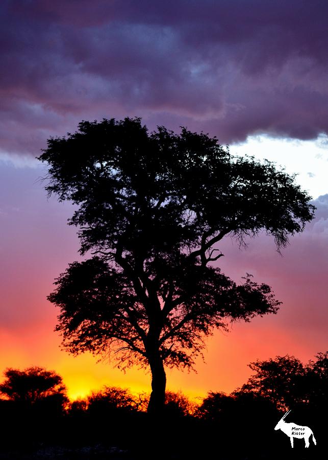 Sonnenuntergang in der Omaheke
