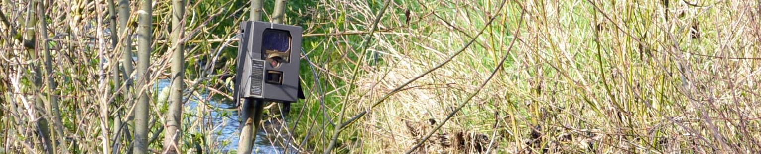 Kamera im Busch