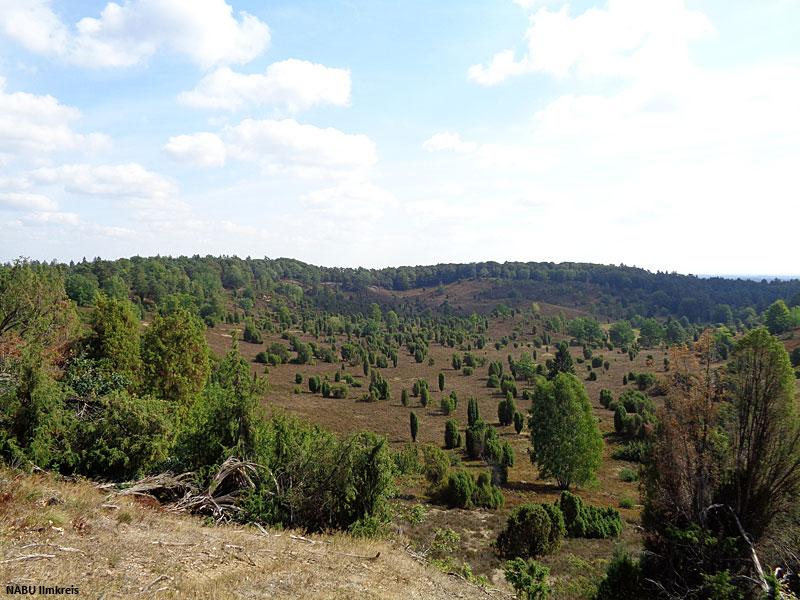 2018: Naturschutzgebiet Totengrund in der Lüneburger Heide (Niedersachsen)