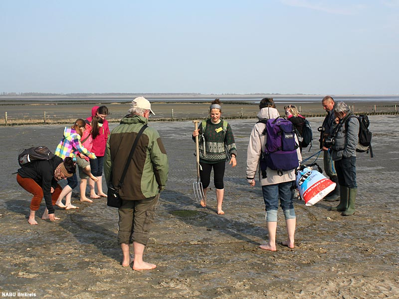 2014: Nationalpark Schleswig-Holsteinisches Wattenmeer