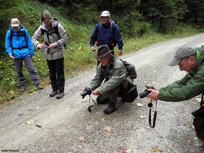 2015: Feuersalamander im Nationalpark Kalkalpen (Österreich)