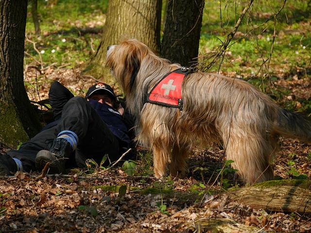 Mikesch-Mailo vom Dänischen Wohld beim Rettungshundetraining