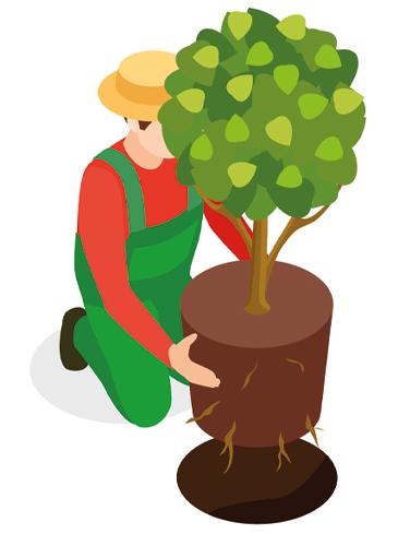 Richtig Pflanzen in 3 Schritten