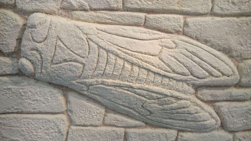 Cigale créé sur une plaque de démonstration