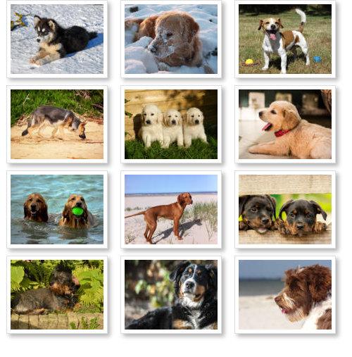 Beispiel: Übersicht Hundekalender