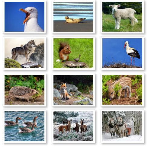 Beispiel: Tierkalender