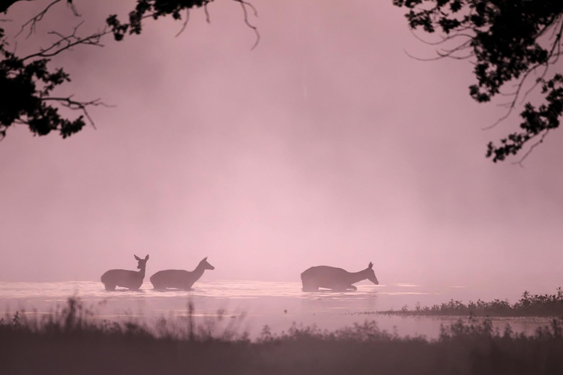 Biches ©Tanguy Valois