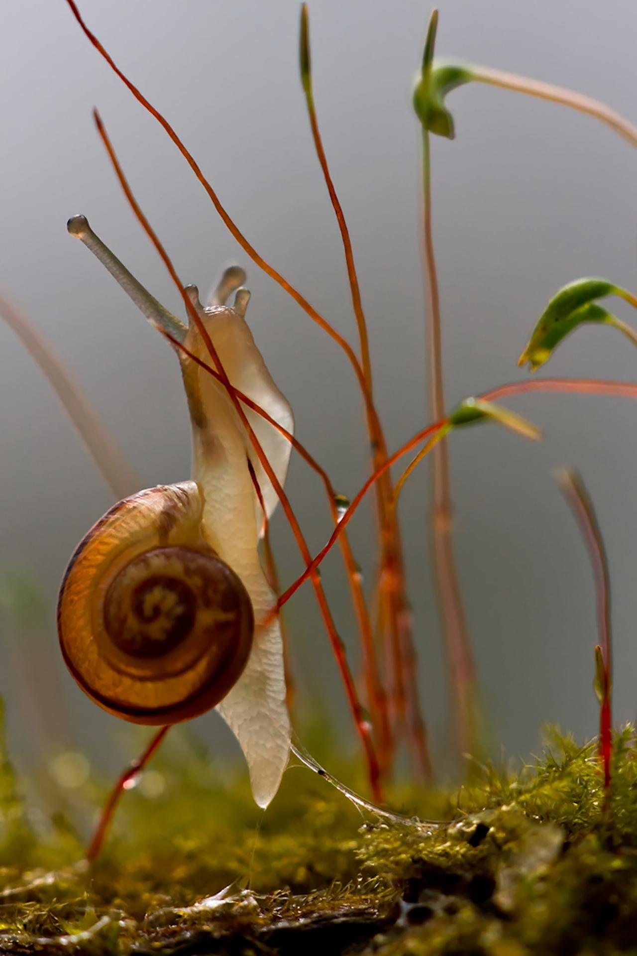Escargot des jardins ©Pascal Jahan