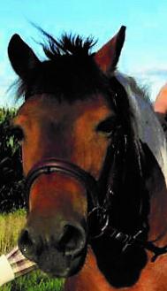 """Pony """"Bella"""" auf dem Imkershof der Familie Röhrs in Schneverdingen-Surbostel"""