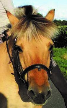 """Pony """"Polly"""" auf dem Imkershof der Familie Röhrs in Schneverdingen-Surbostel"""