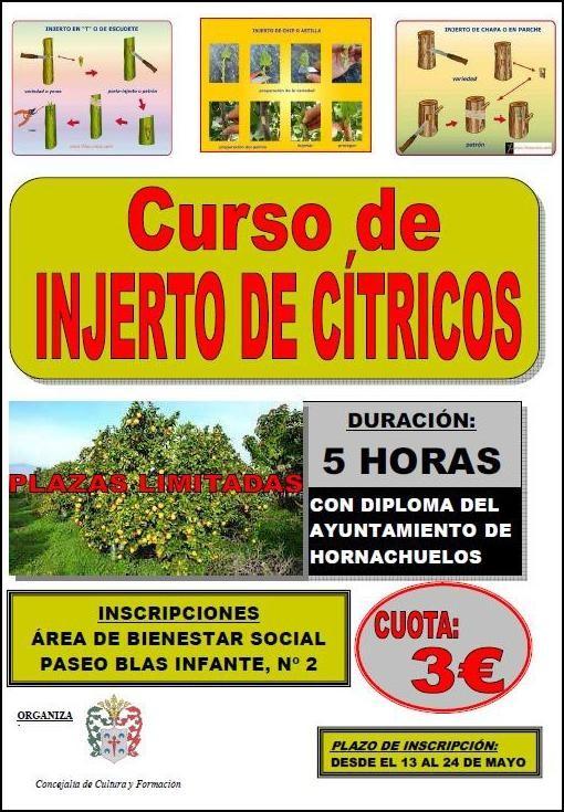 """CURSO DE """"INJERTO DE CÍTRICOS"""" EN HORNACHUELOS. - Haz """"clic"""" en la imagen para ampliar."""