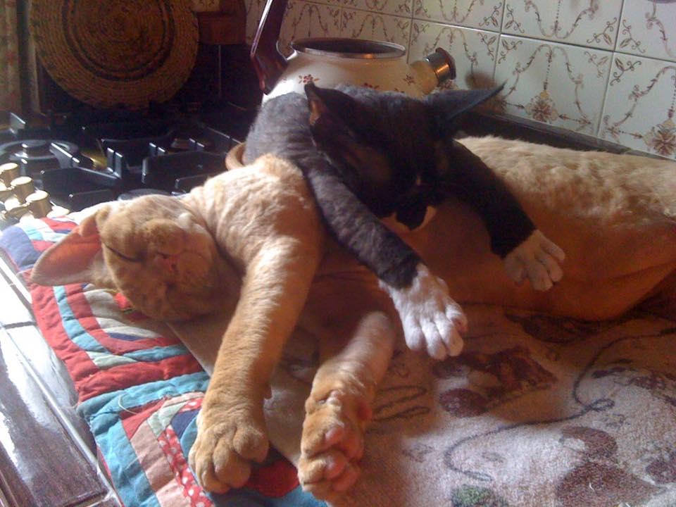 January 2017 : Sandra Arnolfo's cats