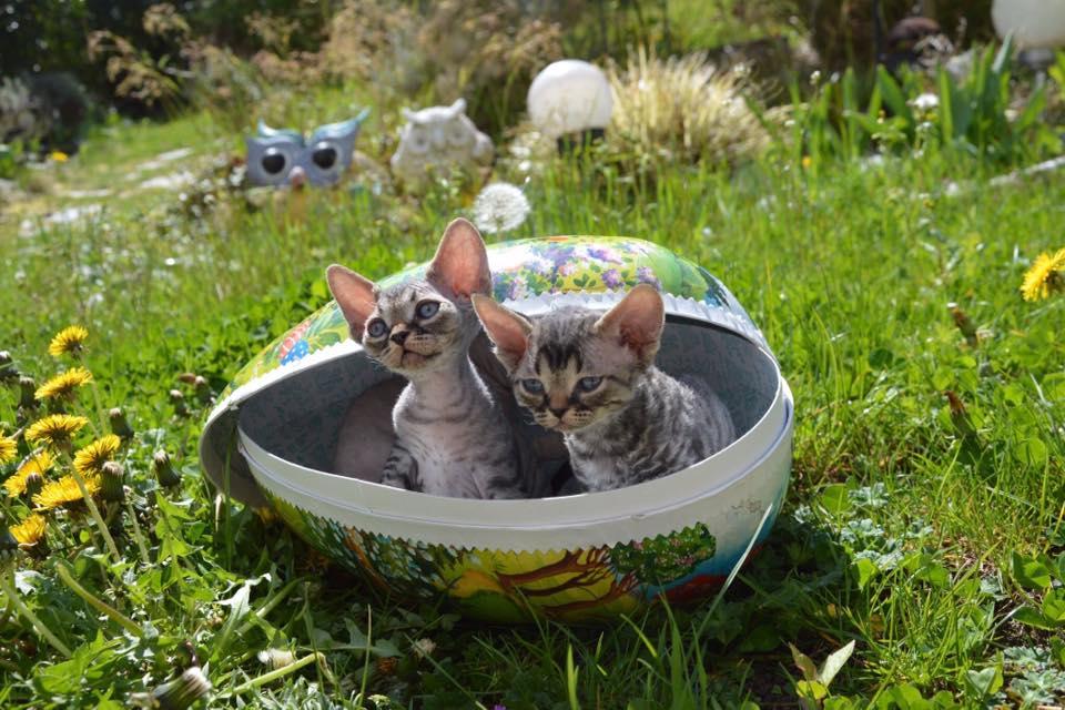 Mai 2019 : Les chatons à Sandra Arnolfo New