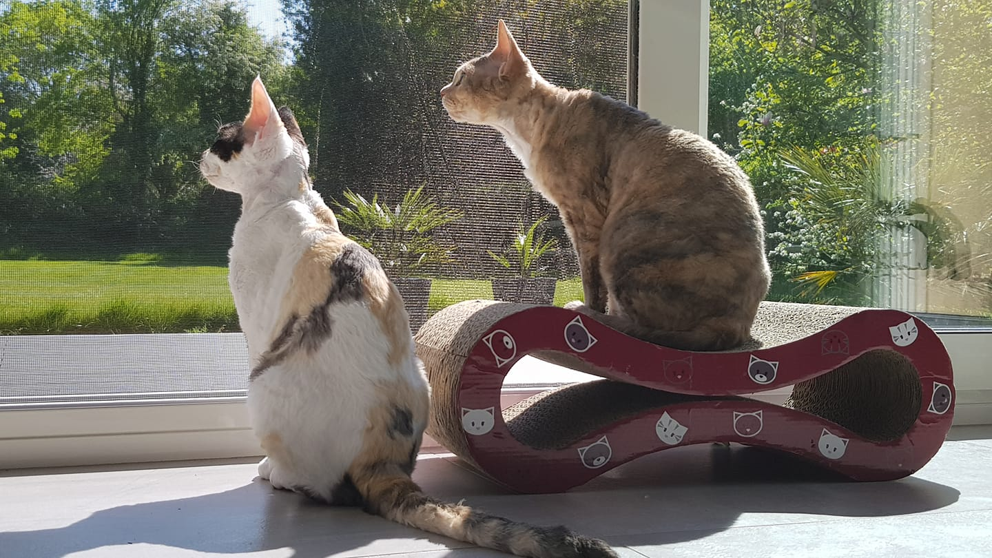 May 2020 : Opaline and Pauline / Cattery of Yuvaline
