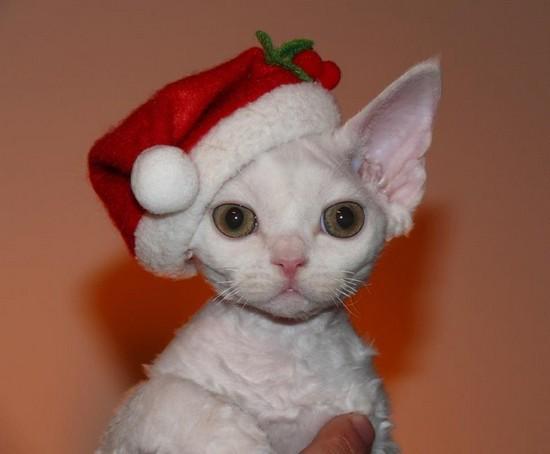 Christmas 2012: Rex Runner Gabriel Van Helsing / Reny Lorenzi